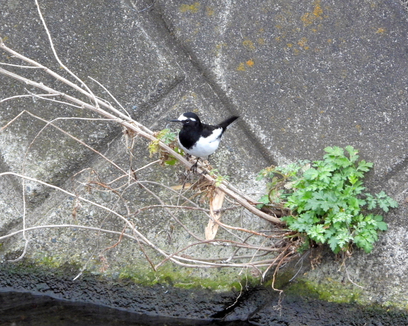 雨が降る前に 三ツ寺公園で鳥撮り_c0305565_17410795.jpg
