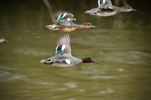 1月27日の淡路島の野鳥_a0153971_10502595.jpg