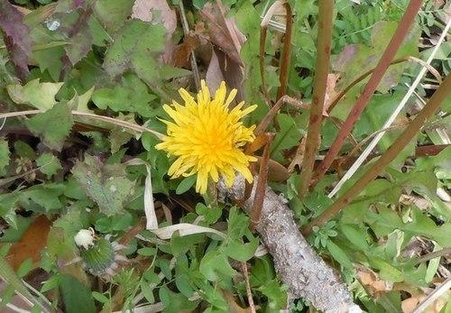 路傍の花、樹々の鳥(366) ~ 訪れてしまった春 ~_b0102572_21450311.jpg
