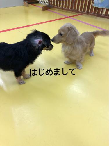 保育園ブログ_f0357682_00431223.jpg