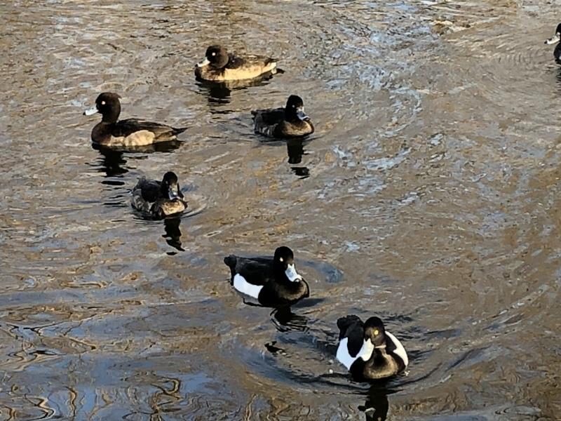 水鳥_a0129492_19284909.jpeg