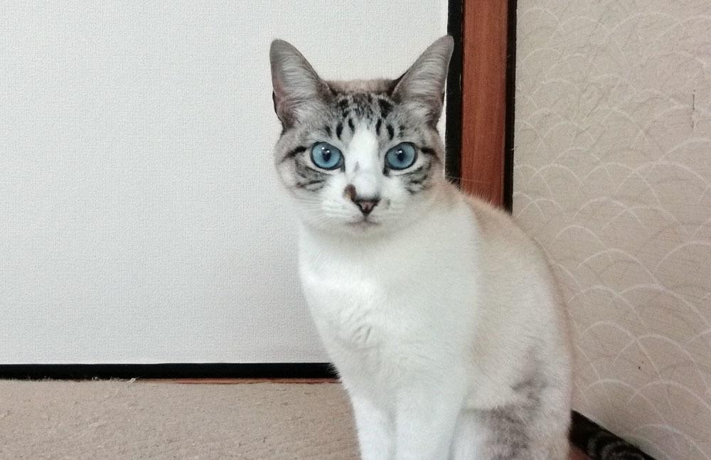 猫ふんじゃった_b0114798_16352875.jpg