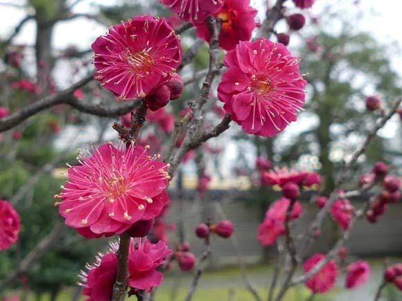 渉成園(枳殻邸) 東本願寺_e0048413_21032038.jpg