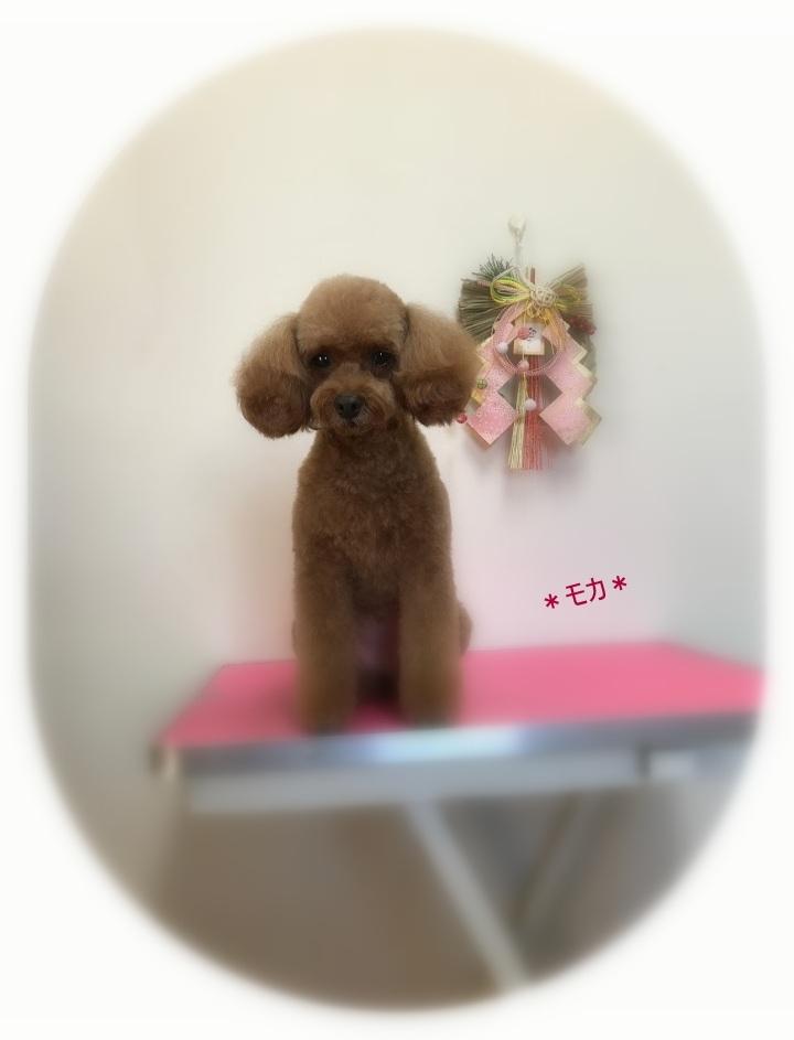 モカちゃん_a0315823_20092247.jpg
