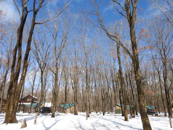 雪が降りました!天気予報、道路状況最新をチェックして(2020年1月28日)_b0174425_13111695.jpg