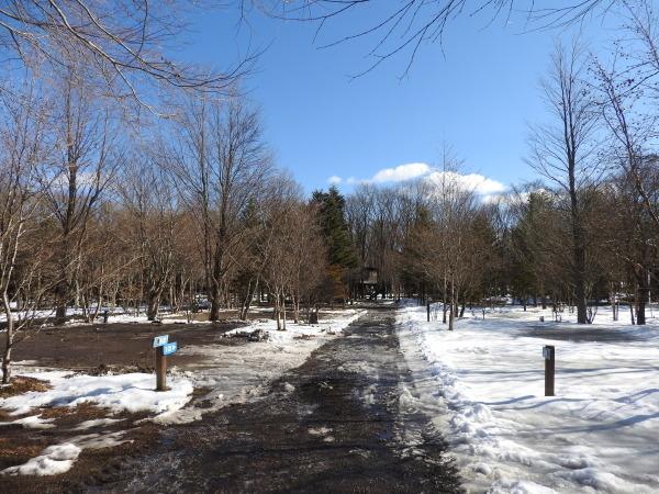 今週末の天気と気温(2020年1月30日):春から冬の気温へ_b0174425_13203778.jpg