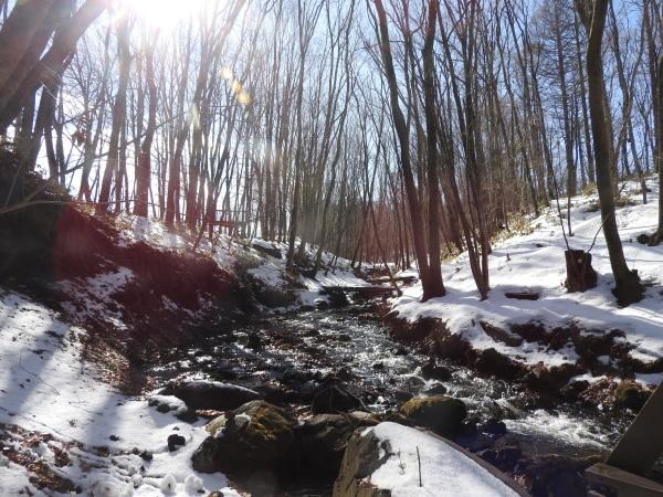 今週末の天気と気温(2020年1月30日):春から冬の気温へ_b0174425_13335542.jpg