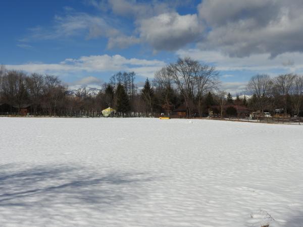 今週末の天気と気温(2020年1月30日):春から冬の気温へ_b0174425_13481511.jpg