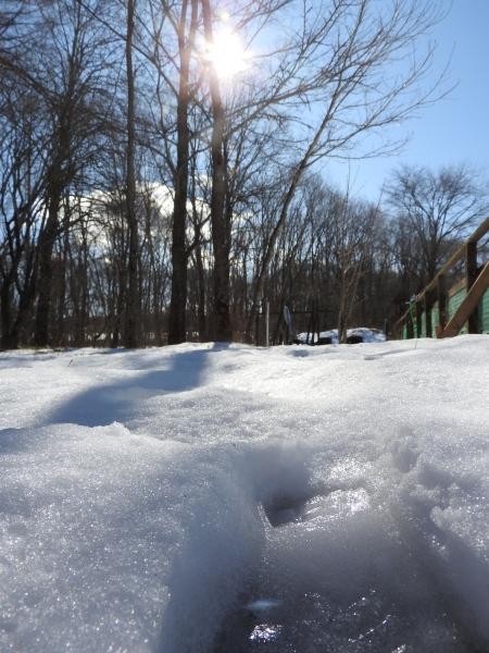 今週末の天気と気温(2020年1月30日):春から冬の気温へ_b0174425_14115465.jpg
