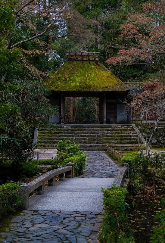 法然院の山茶花_e0363038_12503372.jpg