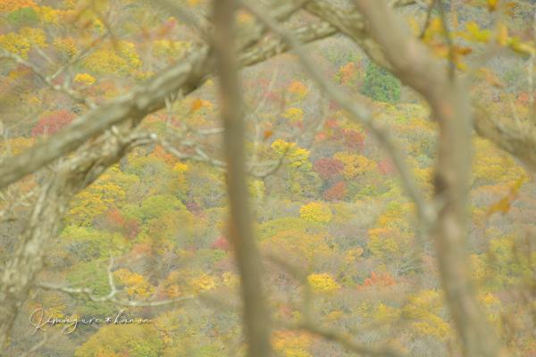 2019.11月の山活③**孫三瓶の急坂は火事場のばかジカラ⁈_b0197639_11105916.jpg