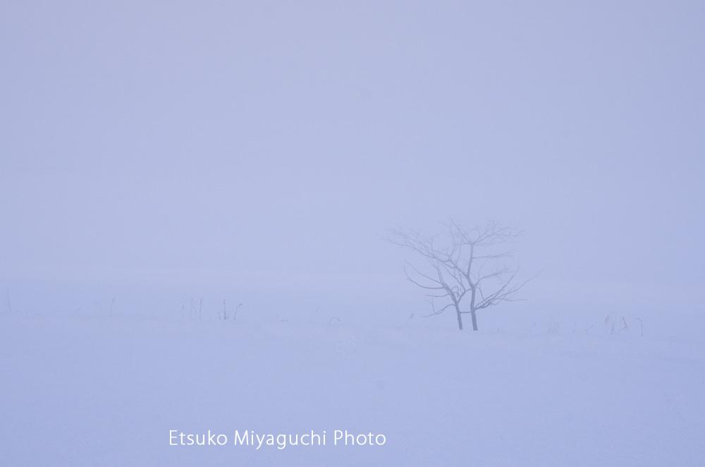 白い霧の朝_f0152939_07421565.jpg