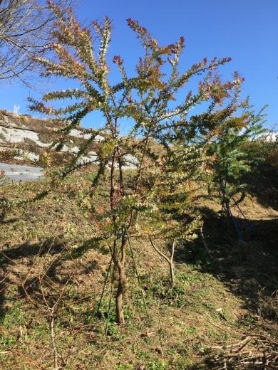 庭に植えた3本のミモザの木 〜フラスコに挿して〜_c0334574_10363160.jpeg