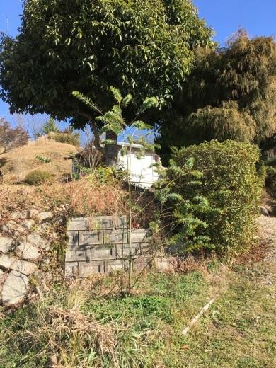 庭に植えた3本のミモザの木 〜フラスコに挿して〜_c0334574_10375736.jpeg