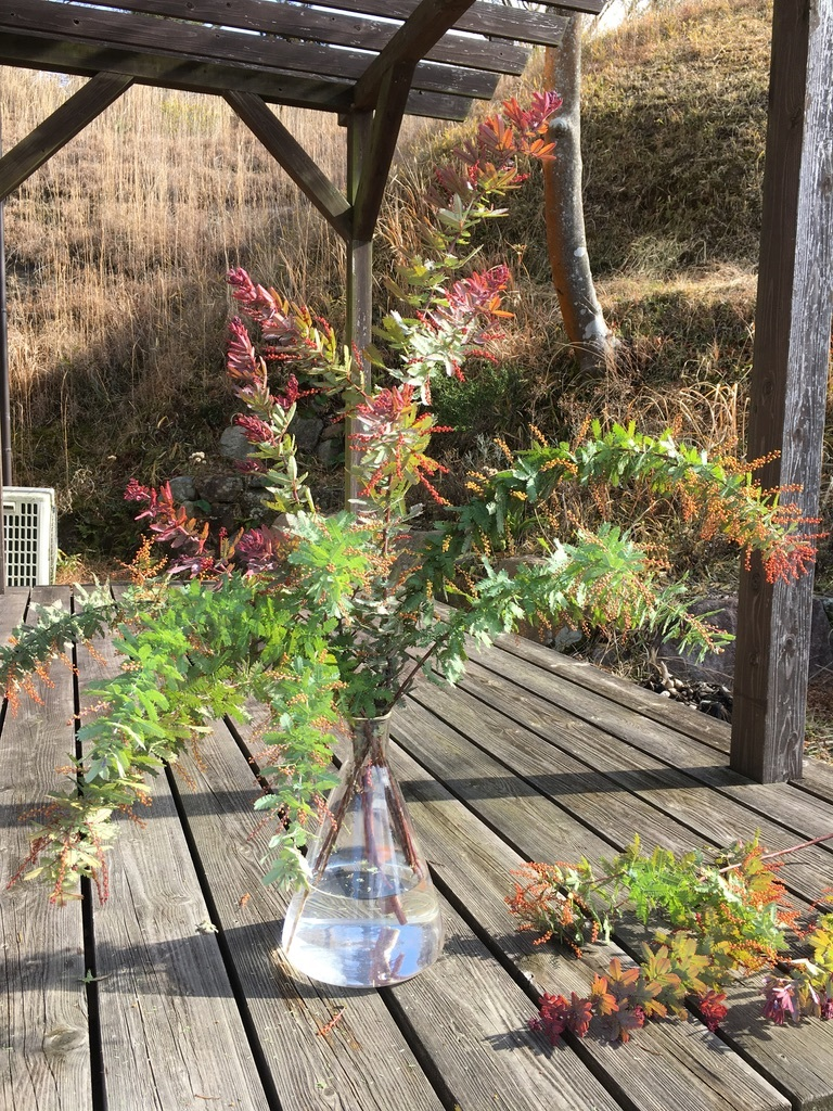 庭に植えた3本のミモザの木 〜フラスコに挿して〜_c0334574_13552979.jpeg