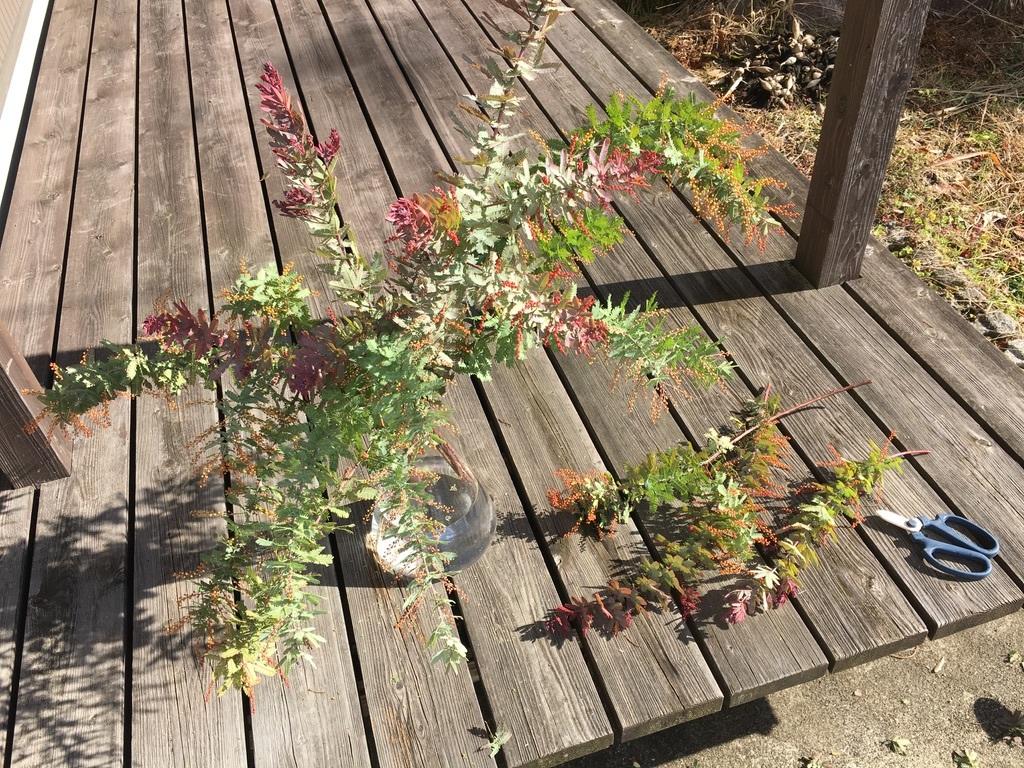 庭に植えた3本のミモザの木 〜フラスコに挿して〜_c0334574_13575773.jpeg