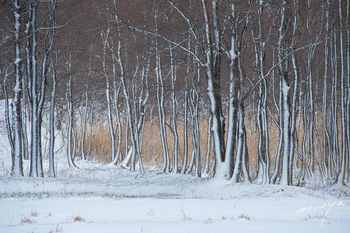 小吹雪の後_c0085877_06164881.jpg