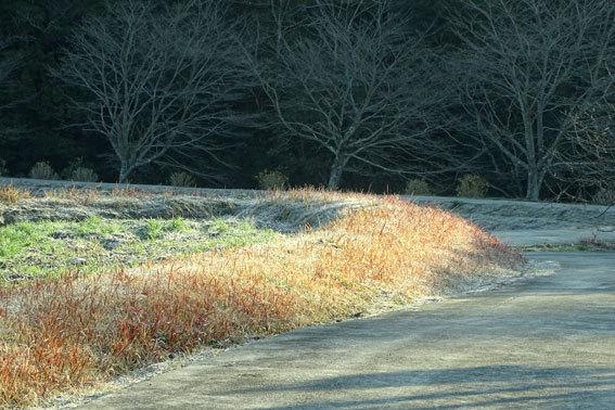 寒い朝は一面白い_b0145296_08561669.jpg