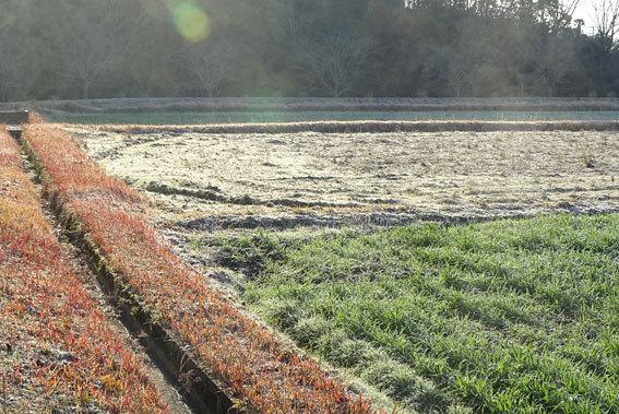 寒い朝は一面白い_b0145296_08561929.jpg