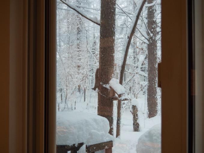 久しぶりの大雪に見舞われています。そんな中でもエゾリス君!_f0276498_22073777.jpg