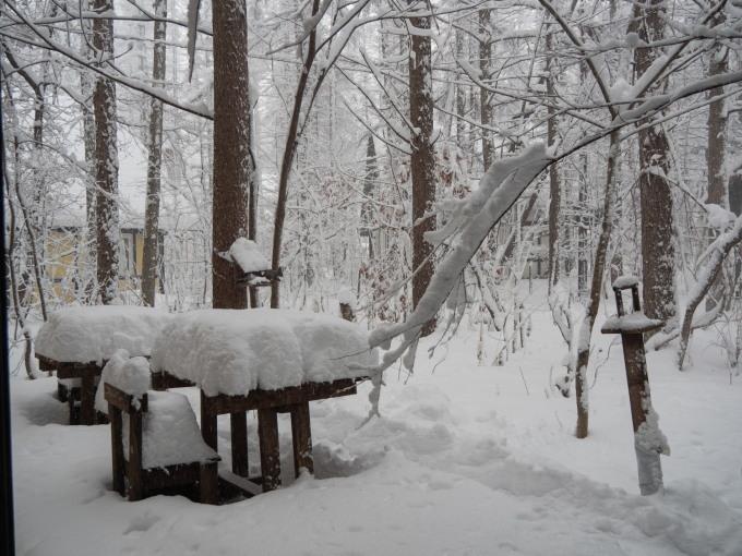 久しぶりの大雪に見舞われています。そんな中でもエゾリス君!_f0276498_22074635.jpg
