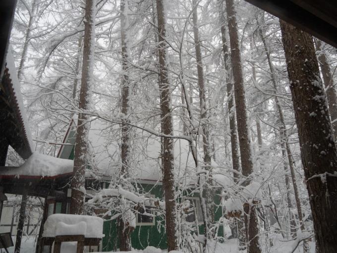 久しぶりの大雪に見舞われています。そんな中でもエゾリス君!_f0276498_22082048.jpg