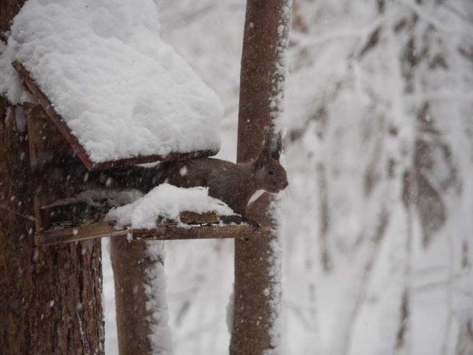 久しぶりの大雪に見舞われています。そんな中でもエゾリス君!_f0276498_22083430.jpg