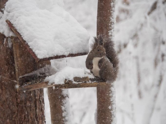 久しぶりの大雪に見舞われています。そんな中でもエゾリス君!_f0276498_22275528.jpg