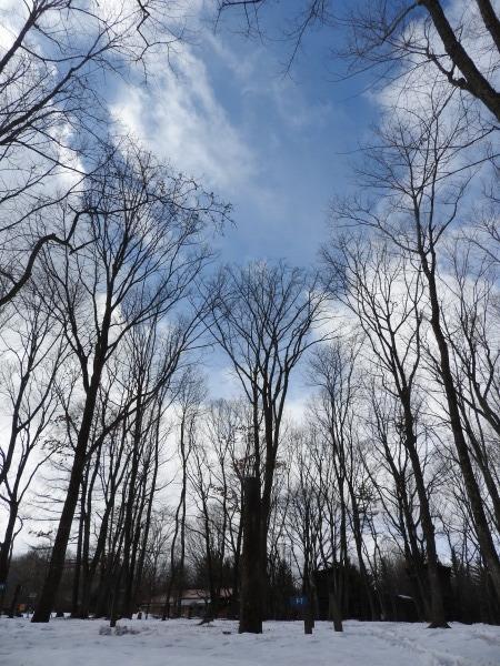 今週末の天気と気温(2020年1月30日):春から冬の気温へ_b0174425_13494685.jpg