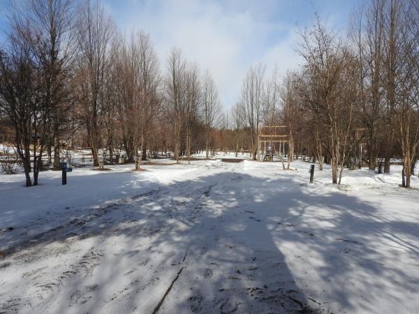 今週末の天気と気温(2020年1月30日):春から冬の気温へ_b0174425_13495318.jpg