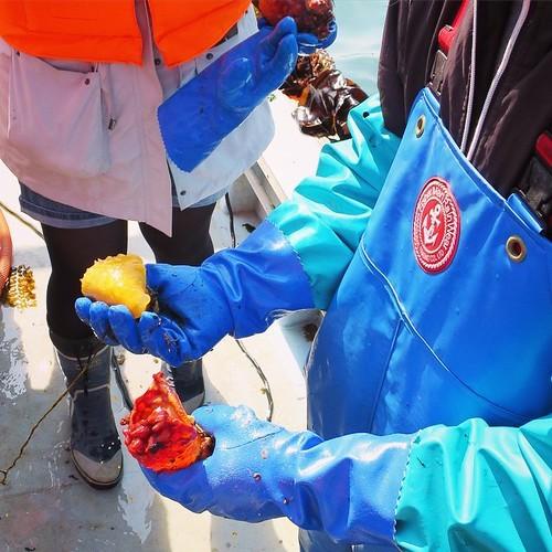 漁船で食べる獲れたてもぎたてのホヤはやっぱり美味かった_c0060143_18230950.jpg