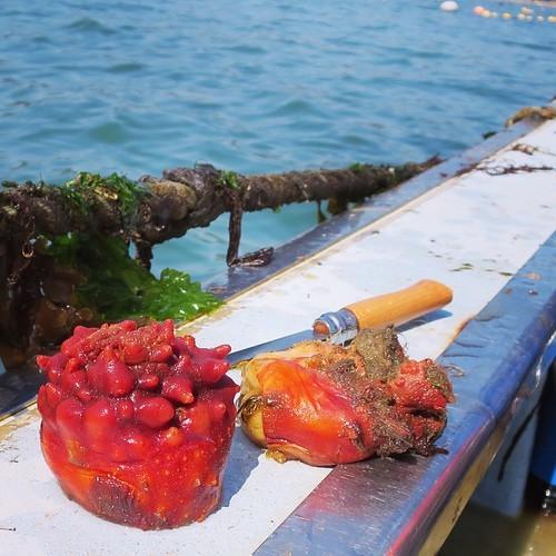 漁船で食べる獲れたてもぎたてのホヤはやっぱり美味かった_c0060143_18231023.jpg