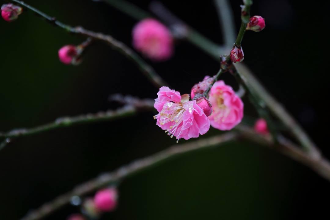 ヤマガラ、冬桜_e0403850_17230467.jpg