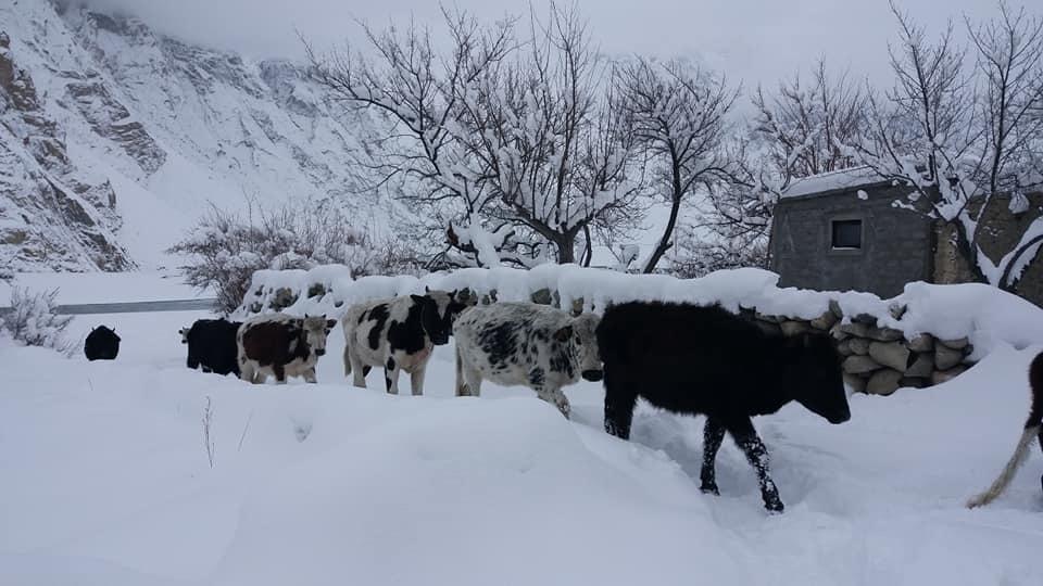 春はまだ 厳冬期が続きます _d0106555_10210459.jpg
