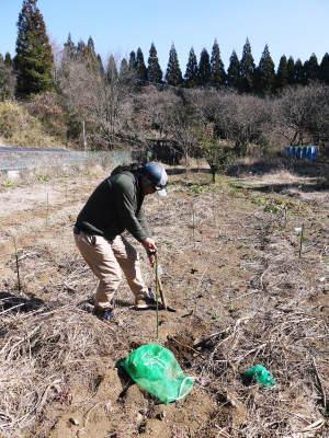 『ダリアの球根』 2020年の販売に向け球根の掘り上げ作業を現地取材!必ず発芽する球根だけを販売(前編)_a0254656_17384660.jpg