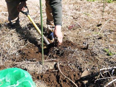 『ダリアの球根』 2020年の販売に向け球根の掘り上げ作業を現地取材!必ず発芽する球根だけを販売(前編)_a0254656_17412485.jpg