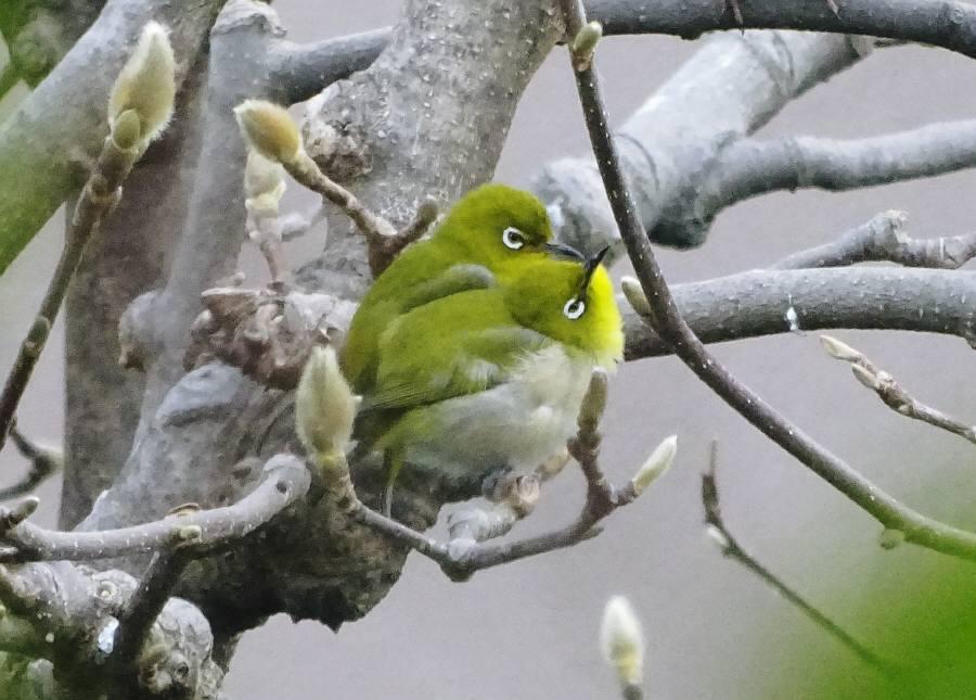 庭に来た野鳥_f0059673_14073231.jpg