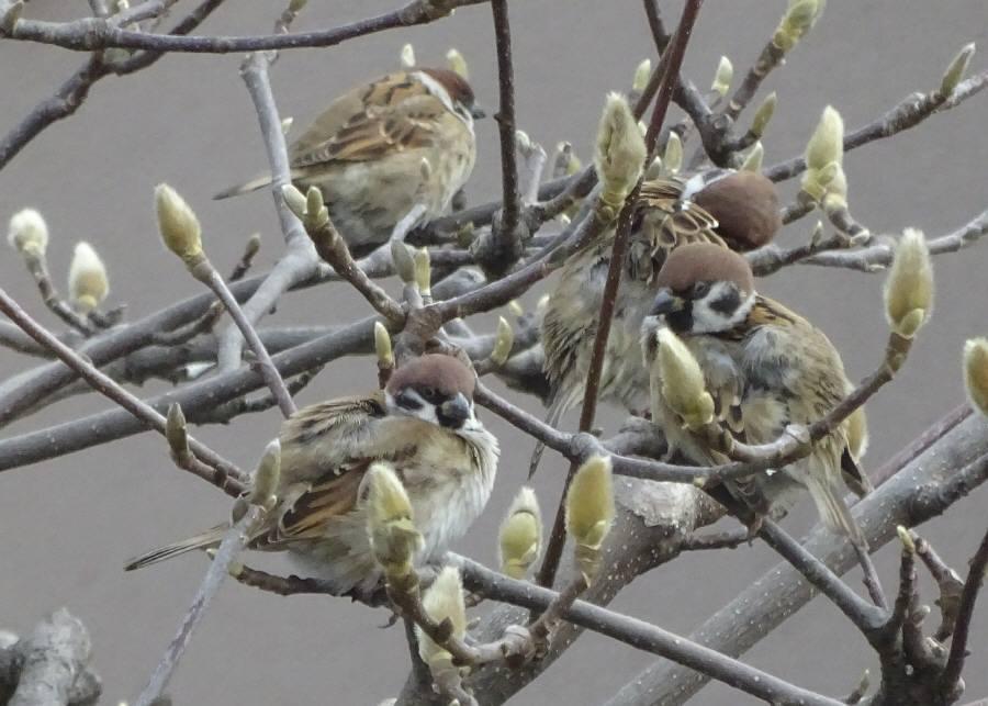 庭に来た野鳥_f0059673_14074217.jpg