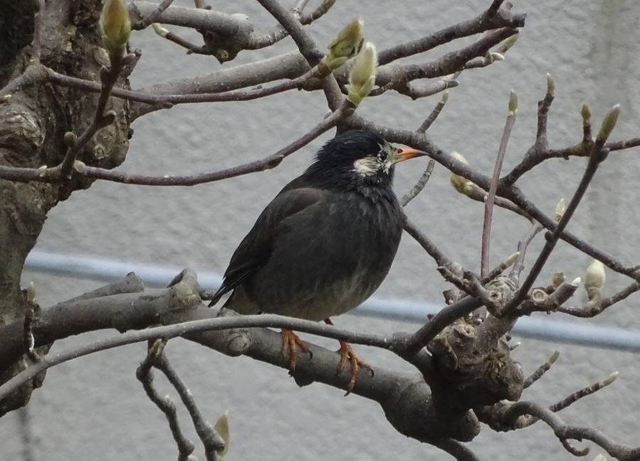 庭に来た野鳥_f0059673_14075297.jpg