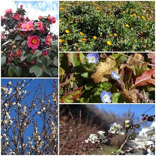 二月になってしまいました。  多摩丘陵百草園ウォーキング_c0051105_21513601.jpg