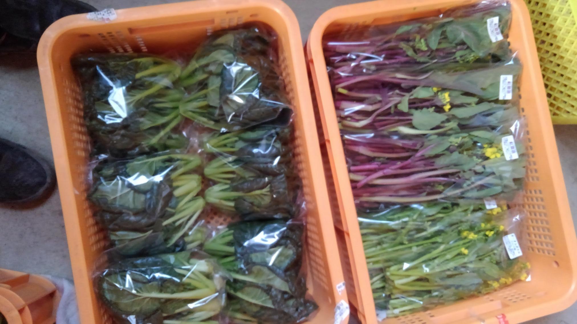明日搬入する産直野菜です。_d0026905_12441704.jpg