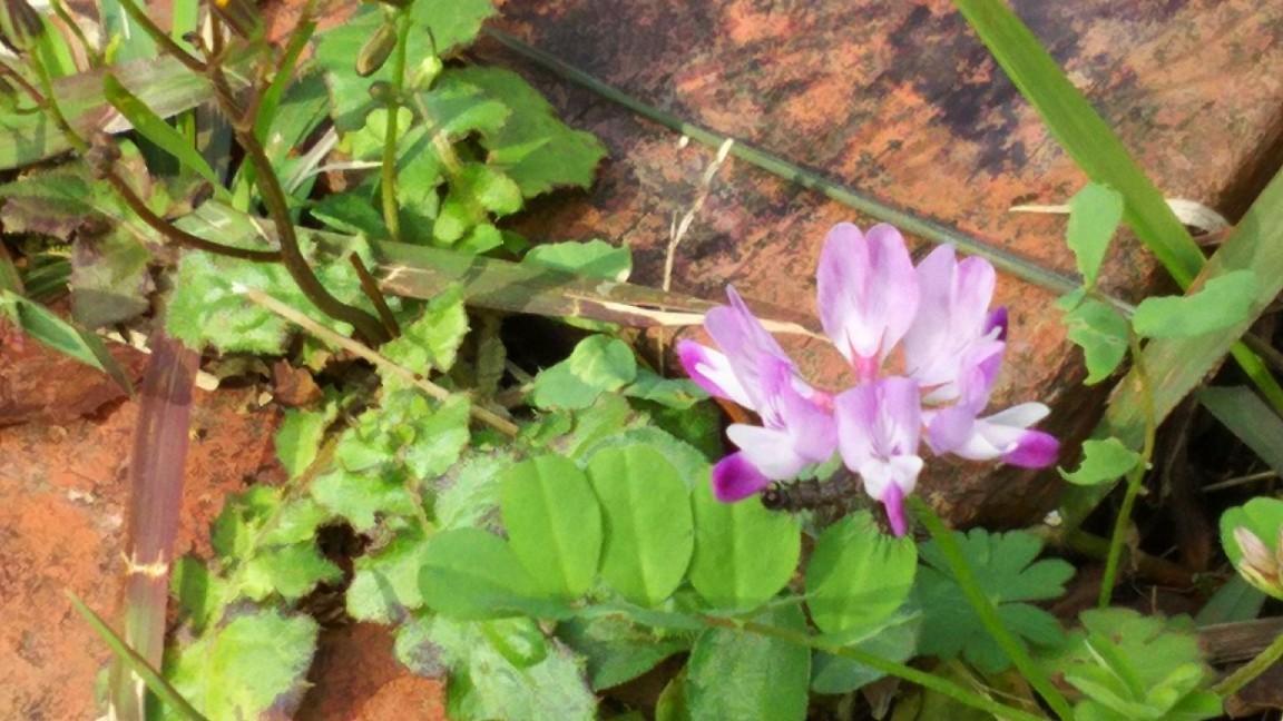 2月1日 レンゲの花に。_a0204408_20023381.jpg