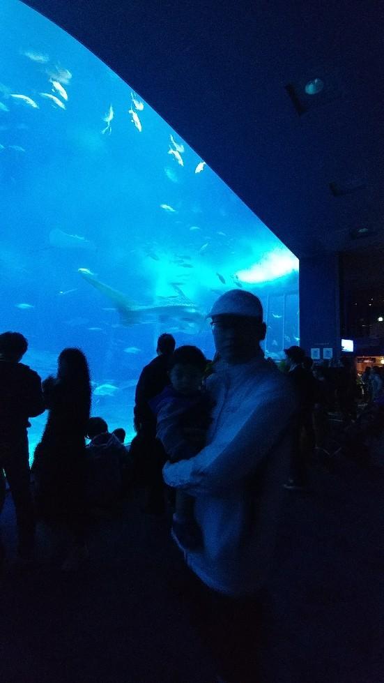 海洋博トリム(1月分)_d0319812_13550904.jpg