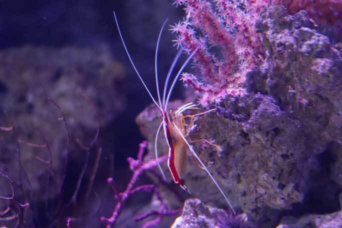 共生する生き物、潜る魚~クマノミとチンアナゴ(アクアパーク品川)_b0355317_13000448.jpg