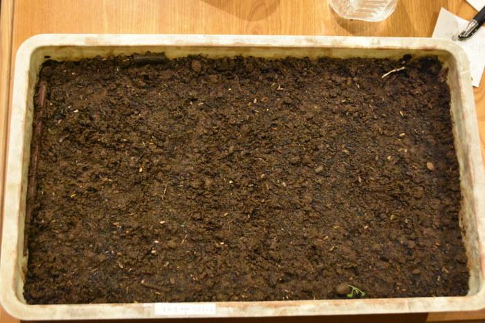 トマトの種を播いて、夏野菜の始まりです。_f0189218_23401863.jpg