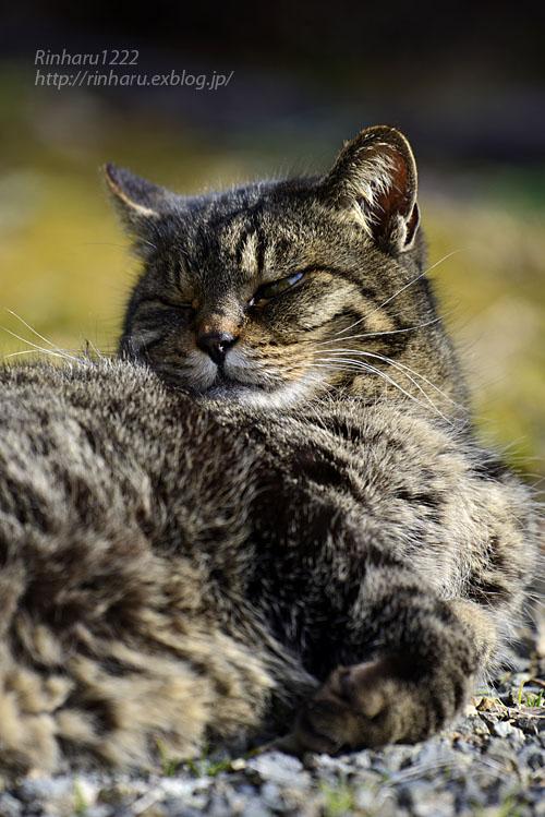 2020.1.14 我が家の猫たち(とらたろう、まお、くぅ)【Cats】_f0250322_22562974.jpg