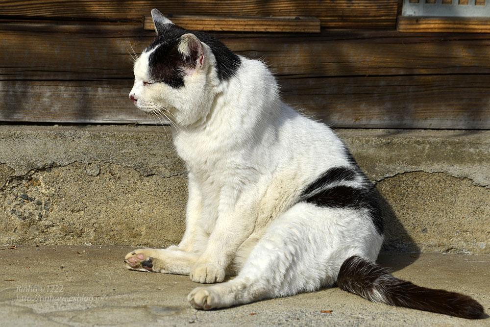 2020.1.14 我が家の猫たち(とらたろう、まお、くぅ)【Cats】_f0250322_22571516.jpg
