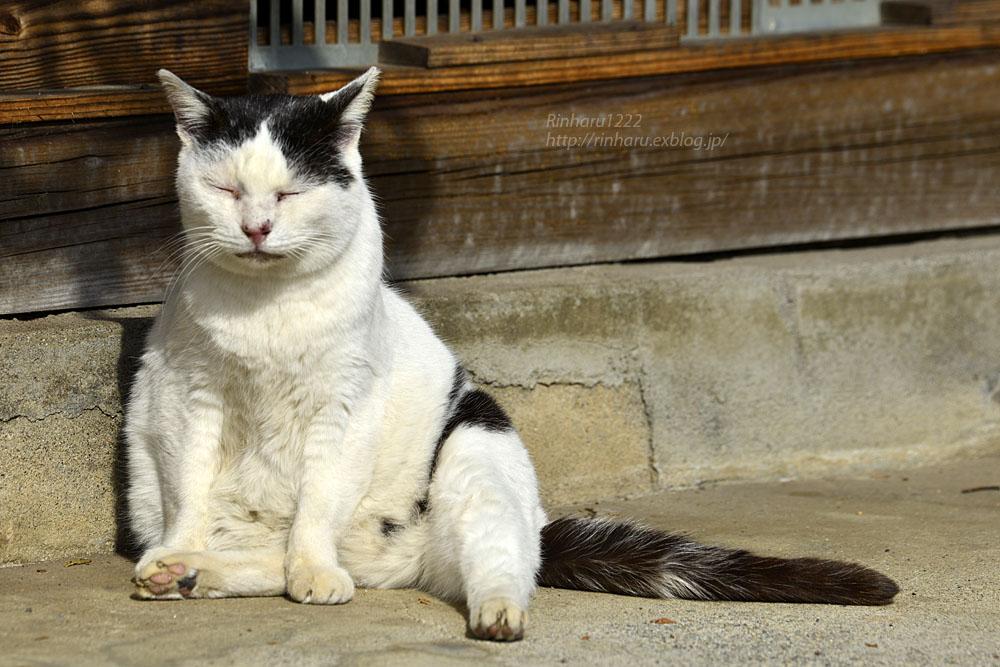 2020.1.14 我が家の猫たち(とらたろう、まお、くぅ)【Cats】_f0250322_22572129.jpg