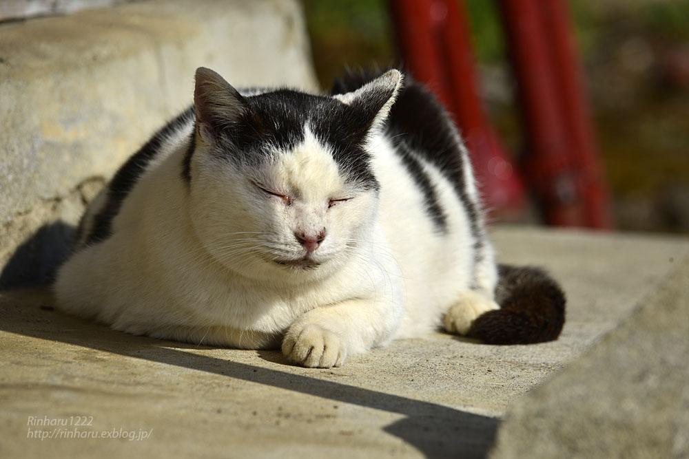 2020.1.14 我が家の猫たち(とらたろう、まお、くぅ)【Cats】_f0250322_22572777.jpg