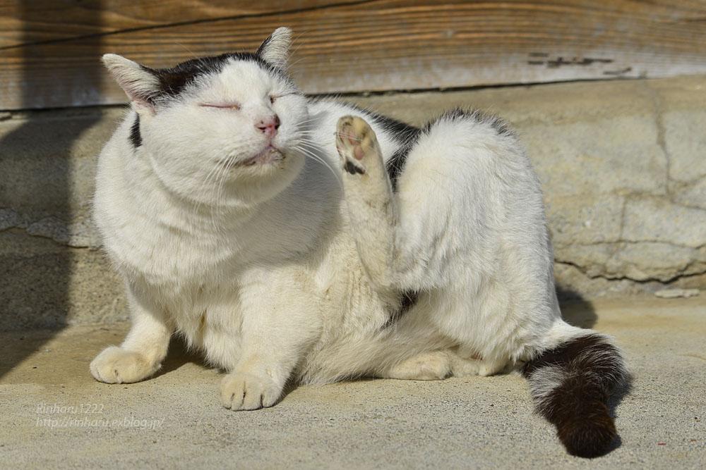 2020.1.14 我が家の猫たち(とらたろう、まお、くぅ)【Cats】_f0250322_22574295.jpg